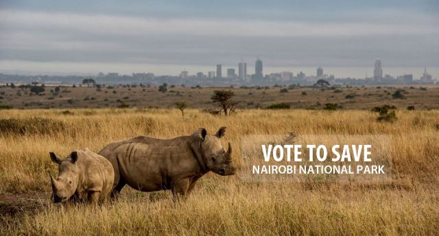 rhino-in-front-of-nairobi-skyline-vote