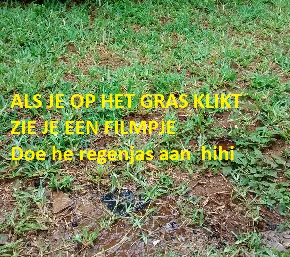 het gras is blij