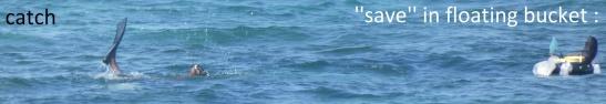 oceanspoilers2